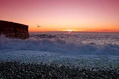 Gaviotas en la costa Fotos de archivo
