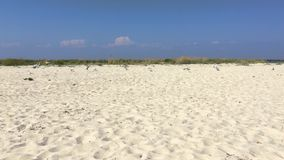 Gaviotas en la costa almacen de video