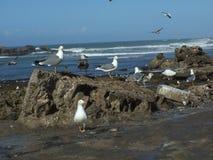 Gaviotas en la orilla de mar Fotos de archivo