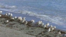 Gaviotas en la orilla de mar almacen de video