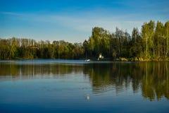 Gaviotas en la pesca de lago imagen de archivo