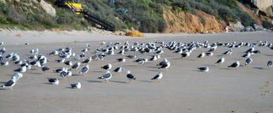 Gaviotas en la playa Fotografía de archivo libre de regalías