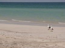 Gaviotas en la playa Foto de archivo libre de regalías