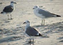 Gaviotas en la playa Foto de archivo