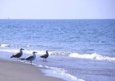 Gaviotas en la playa Imagen de archivo libre de regalías