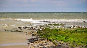Gaviotas en la playa de la isla del Frisian de Vlieland foto de archivo