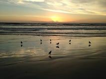 Gaviotas en la playa de Océano Atlántico durante amanecer Imagenes de archivo