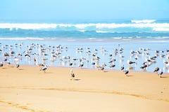 Gaviotas en la playa en el Océano Atlántico Fotos de archivo libres de regalías
