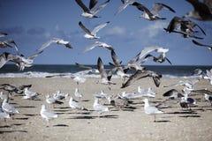 Gaviotas en la playa vacía en Normandía en otoño Imagenes de archivo
