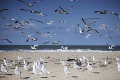 Gaviotas en la playa vacía en Normandía en otoño Foto de archivo libre de regalías