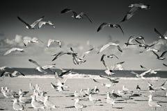 Gaviotas en la playa vacía en Normandía en otoño Imagen de archivo