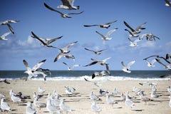 Gaviotas en la playa vacía en Normandía en otoño Fotografía de archivo