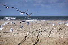 Gaviotas en la playa vacía en Normandía en otoño Fotos de archivo