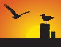 Gaviotas en la puesta del sol stock de ilustración