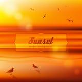 Gaviotas en la puesta del sol Ilustración del vector del fondo Foto de archivo libre de regalías