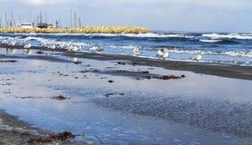 Gaviotas en Larnaca en una playa arenosa Fotos de archivo libres de regalías