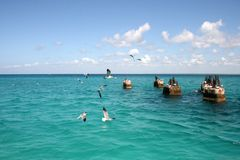 Gaviotas en las piedras en el mar en un día soleado fotografía de archivo libre de regalías