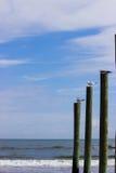 Gaviotas en los posts en la playa Fotos de archivo libres de regalías