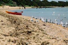 Gaviotas en una playa Imagen de archivo libre de regalías