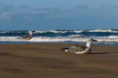 Gaviotas en una playa Foto de archivo libre de regalías