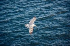 Gaviotas en vuelo contra el contexto de las ondas azules profundas del mar foto de archivo