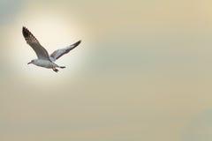 Gaviotas migratorias Imagen de archivo libre de regalías