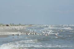 Gaviotas por el mar Foto de archivo libre de regalías