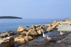 Gaviotas por el mar Imagenes de archivo
