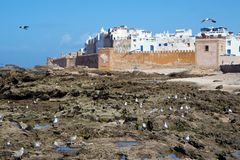 Gaviotas por las paredes viejas de Medina de Essaouira, Marruecos Imagen de archivo libre de regalías