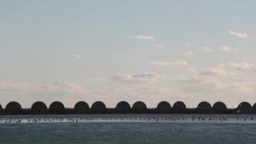 Gaviotas que descansan sobre un banco de arena almacen de metraje de vídeo