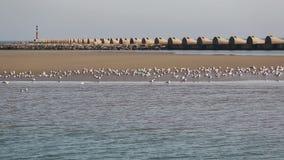 Gaviotas que descansan sobre un banco de arena del rompeolas metrajes