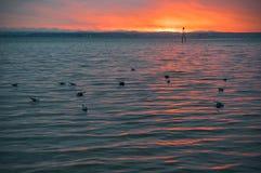 Gaviotas que flotan en la playa por el mar en la puesta del sol foto de archivo