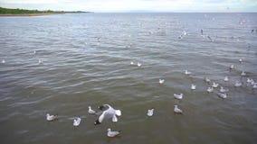 Gaviotas que flotan en la superficie del agua almacen de metraje de vídeo