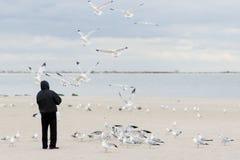 Gaviotas que introducen del hombre Foto de archivo libre de regalías