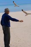 Gaviotas que introducen del hombre mayor. foto de archivo libre de regalías