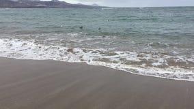 Gaviotas que nadan en el mar almacen de video