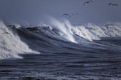 Gaviotas que practican surf la onda Fotos de archivo