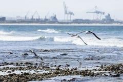 Gaviotas que sacan de una playa rocosa fotografía de archivo