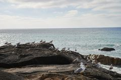 Gaviotas que se colocan en la roca que pasa por alto el océano imagen de archivo
