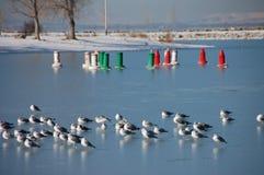 Gaviotas que se sientan en el hielo Imagenes de archivo