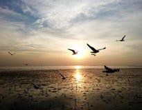Gaviotas que vuelan con puesta del sol imagenes de archivo
