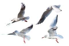 Gaviotas que vuelan el estilo aislado en el fondo blanco imagen de archivo