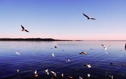 Gaviotas que vuelan en el cielo sobre el lago Imagen de archivo