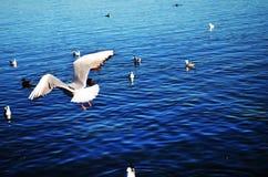 Gaviotas que vuelan en el cielo sobre el lago Fotografía de archivo
