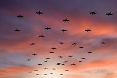 Gaviotas que vuelan en la puesta del sol Imagen de archivo