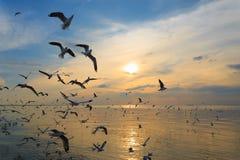 Gaviotas que vuelan en puesta del sol Fotografía de archivo