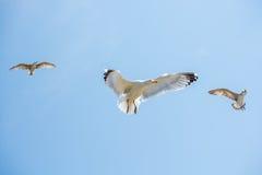 Gaviotas que vuelan en un cielo Imagen de archivo