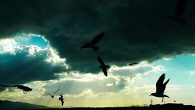 Gaviotas que vuelan la silueta almacen de metraje de vídeo