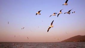 Gaviotas que vuelan sobre el agua de la estela almacen de video