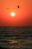 Gaviotas que vuelan sobre el mar en salida del sol Imagen de archivo